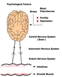 brain-gut-axis1
